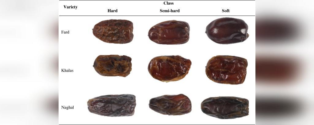 انواع مختلف خرما