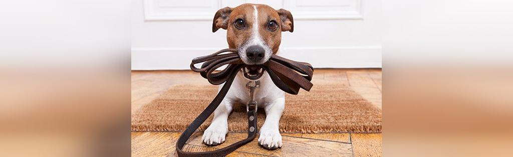 ابزار لازم برای تربیت سگ