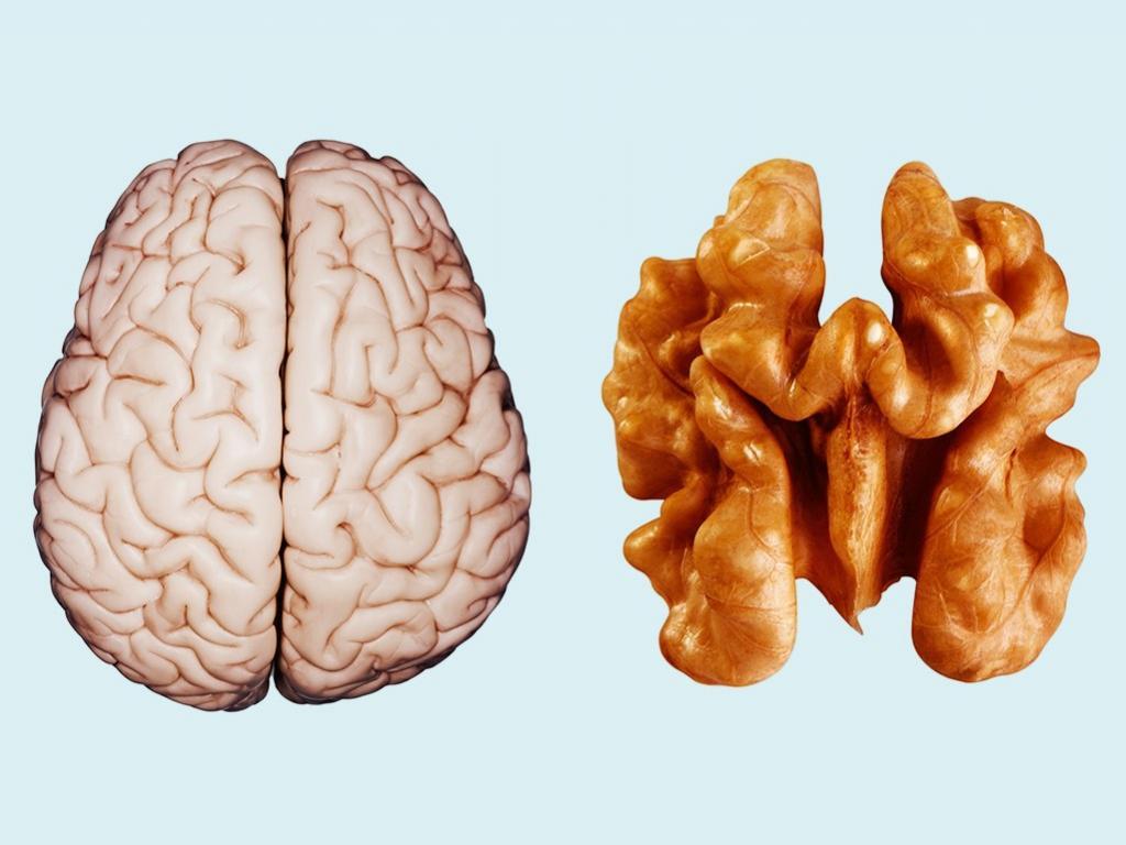 تقویت حافظه با خوردن گردو