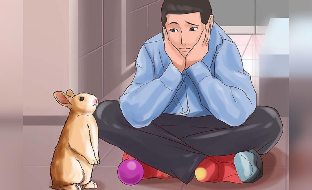 چیزهایی که باید قبل از بازی کردن با خرگوش بدانید